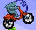 Tiburón moto